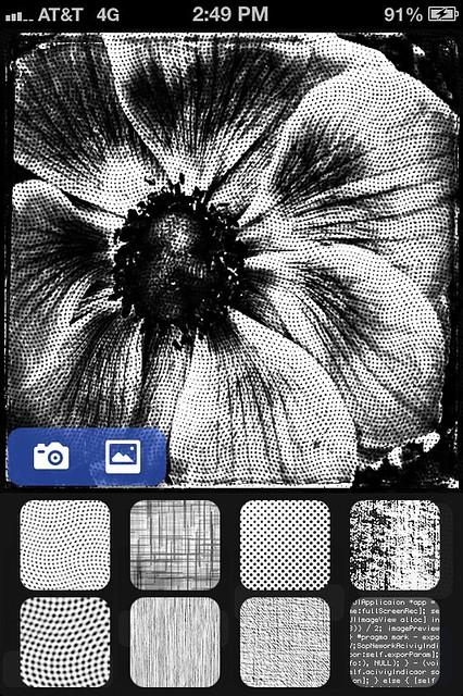 Camera Roll-3424