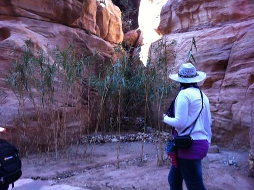 Plants in Petra, enjoying a bit of flat dirt (February 2013)