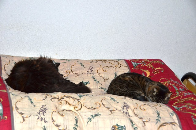 Nera and Tabby settling down for a sleep