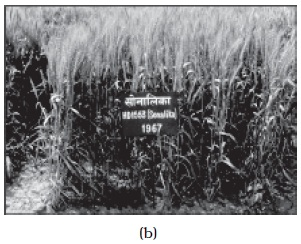 NCERT Class XII Biology Chapter 9 Strategies for Enhancement in Food Production