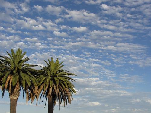 perth palms