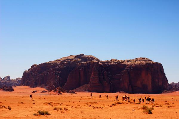 Caravana de camellos
