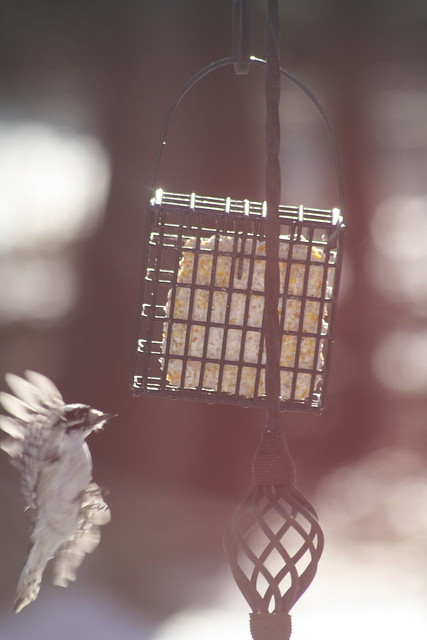 approach to suet