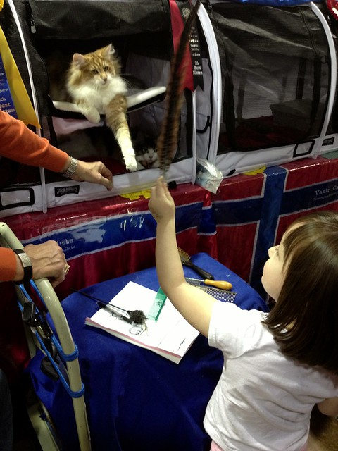 I brought a 3 year old to the cat show! #project365