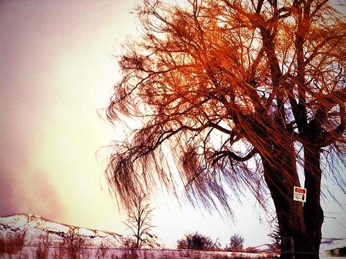 HDR. looks a little like it's on fire by CharlotteKinzie