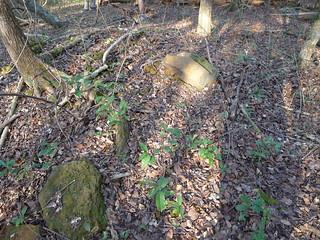 Melrose Plantation Remains