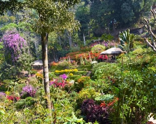 Doi Pui Garden