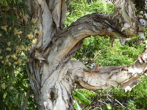 Paper Bark - Carole Grogloth, Molokai Hawaii