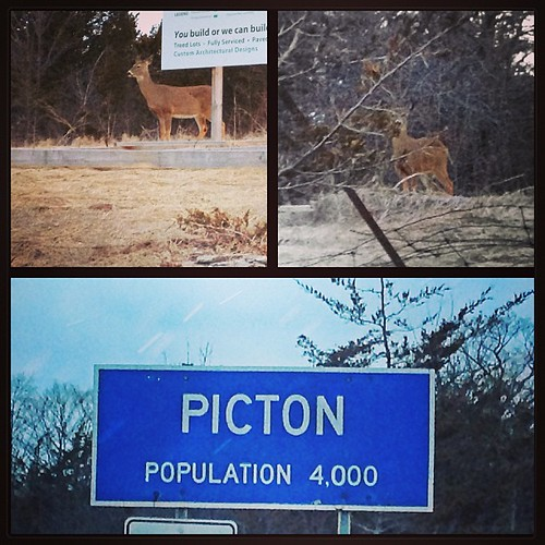 Mar 15 - 'P' {Picton is where I live; but I had an audience this morning} #photoaday #princeedwardcounty