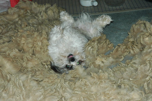 Charlie really loves fleece!