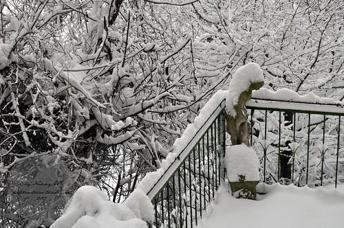 Winterwonderland Nussdorf