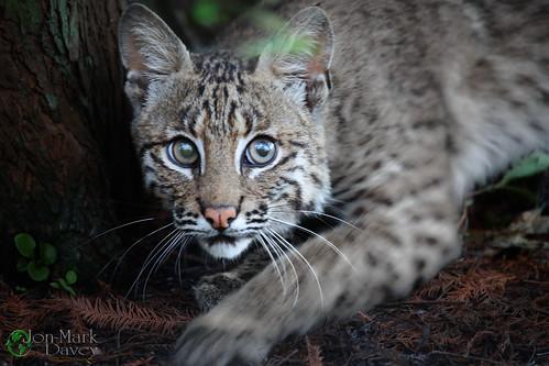 Kitten in the Cypress