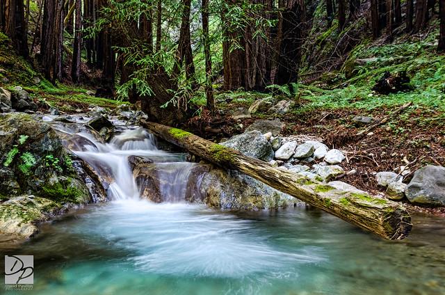 Limekiln Creek Log