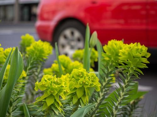 Urbanes Grün