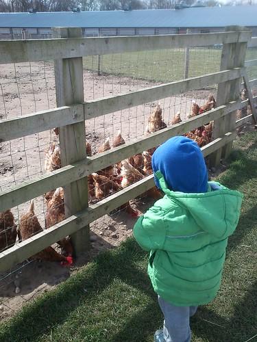 Bettys farm