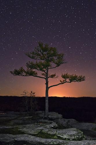 Cosmic Tree by Jeka World Photography