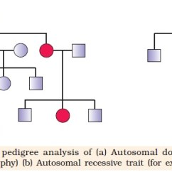 Simple Pedigree Diagram 2004 Jeep Grand Cherokee Infinity Stereo Wiring Ncert Class Xii Biology Chapter 5 : Principles Of Inheritance And Variation | Aglasem Schools