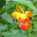 Jewel Flower