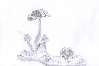 mushrooms by mm