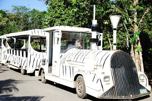 White Tram.