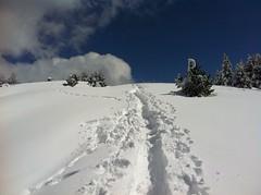 Aufstieg Lutterkopf, kurz vor dem Gipfel