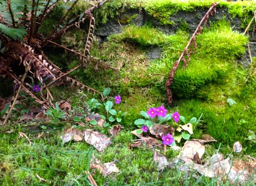 Spring flowers Seattle by DRheins