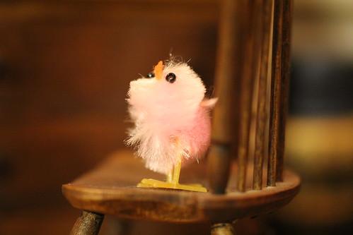 chicks, chicks