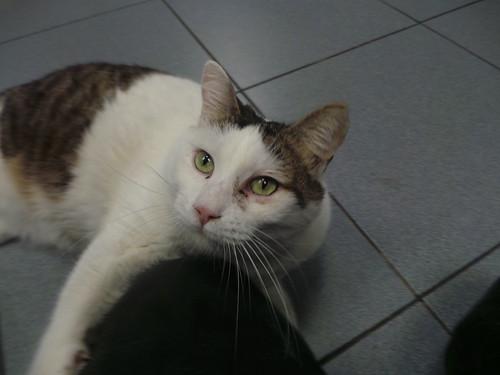 Spanish clinic cats