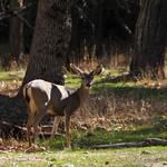 USA, PN Yosemite 07