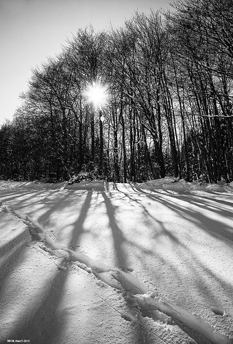 Winter Shadows by LilFr38