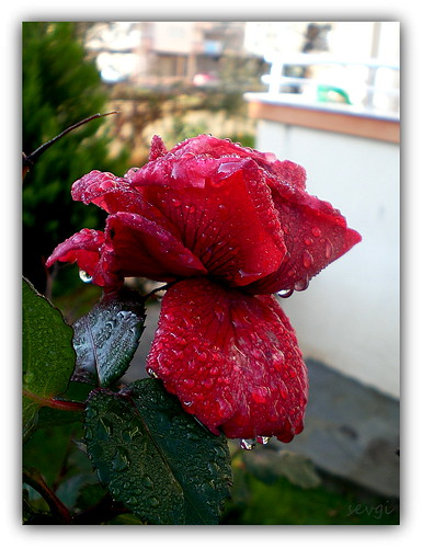 HAPPY SUNDAY♥ by sevgi_durmaz