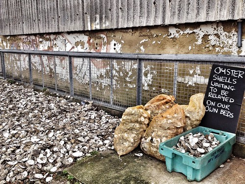 Oyster shells, Rainy Day at Whitstable, Kent