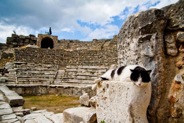 sleepy Ephesus cat