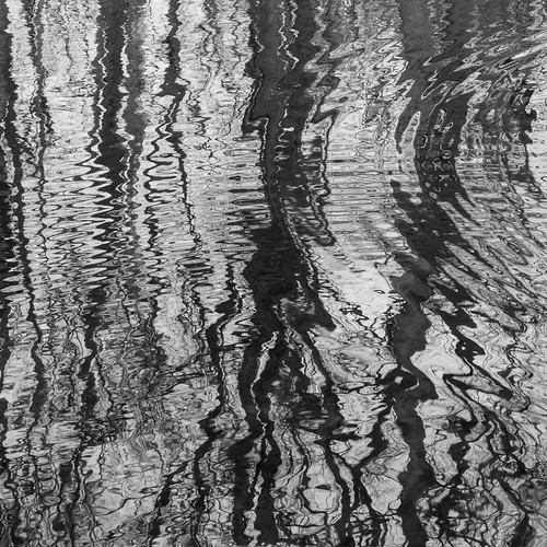 Tree reflections distorted by ripples