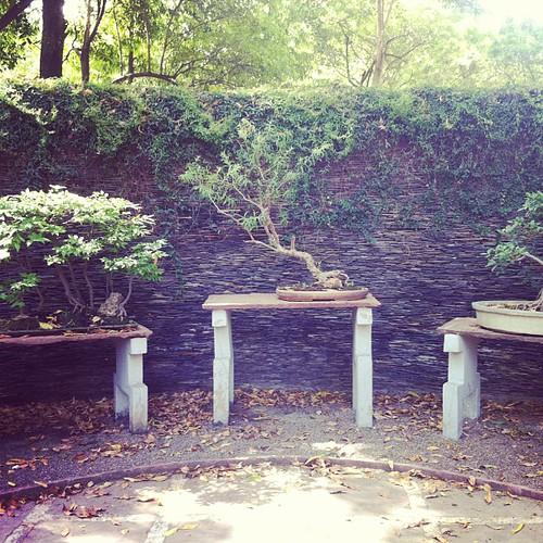 Bonsai garden at lodhi
