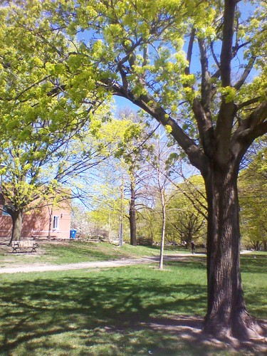 Spring, Dufferin Grove Park