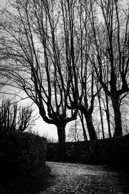 Trees in Chambéry - J J Rousseau's house