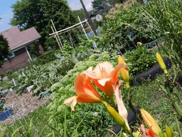 gardens 017