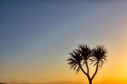Nevada, Tenerife ?, no, it's tonight's palm tree sunset near Port Logan in Dumfries and Galloway ! by emperor1959