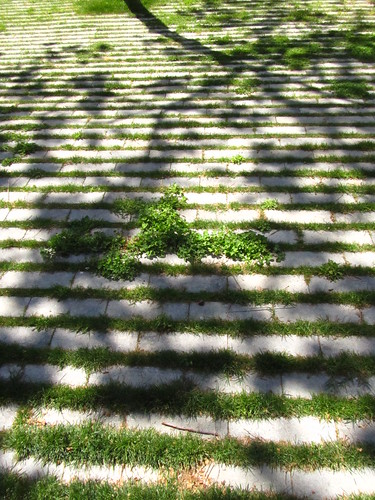 Ombra vegetal/Sombra vegetal by debolsillo