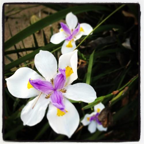 Wild Iris Instagram