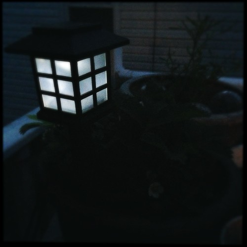 My one solar light that still works from last year. by charmingchris