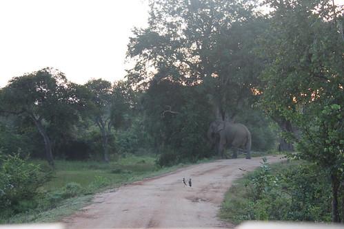 20130121_8217-dawn-elephant