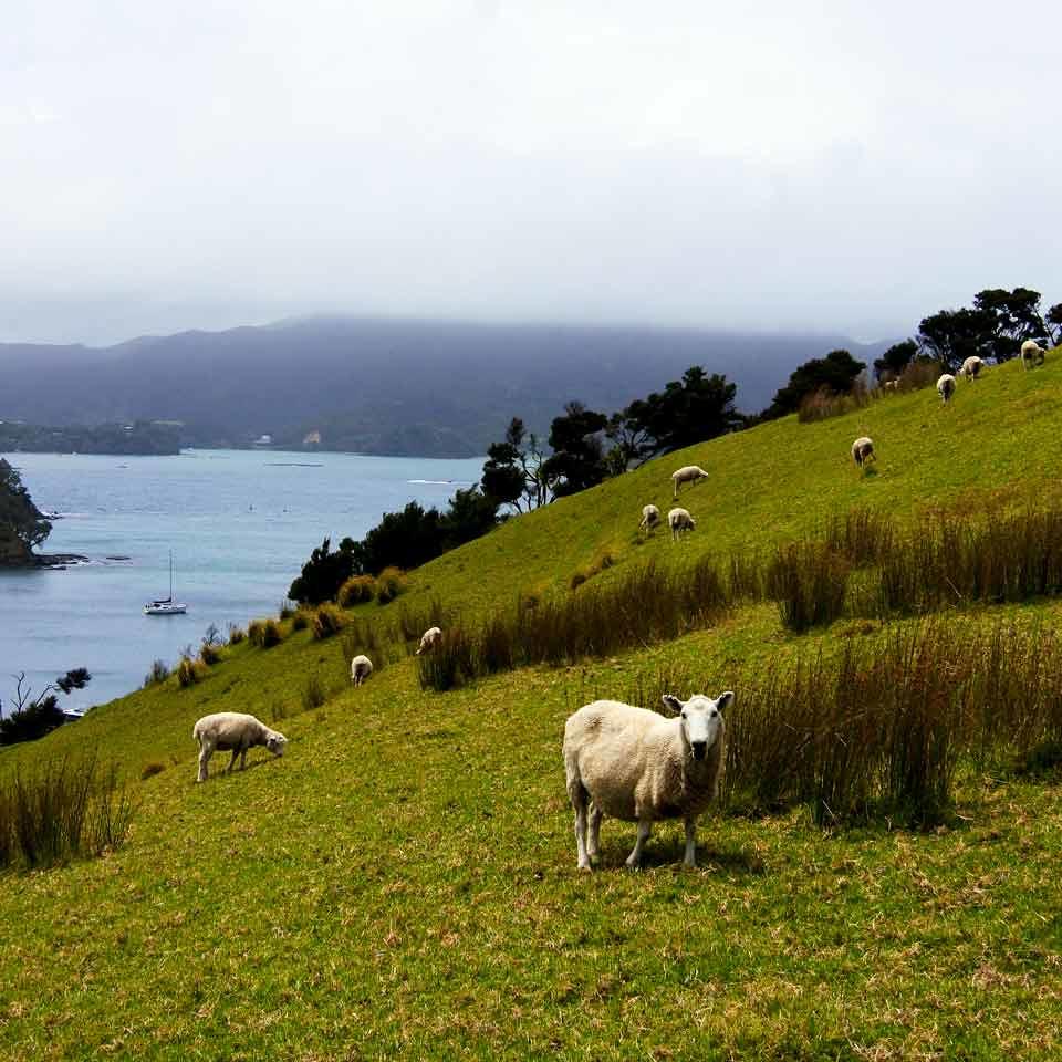 Uusi-Seelanti road trip bussilla (38)