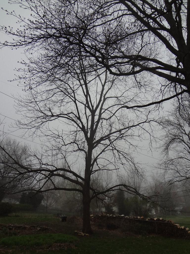 fog_2