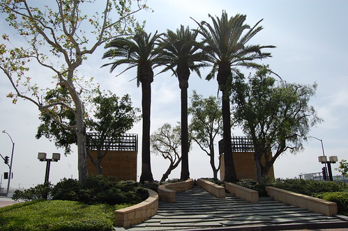 palm trees union station