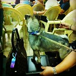 But don't stand on my iPad, Optimus Prime! #cutiedoggie #iPhone