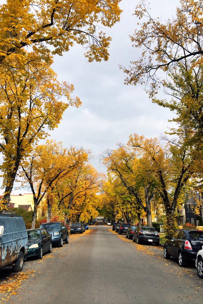 Autumn in Bridgeland