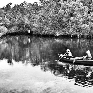 Canoe in Mangrove Tunnels