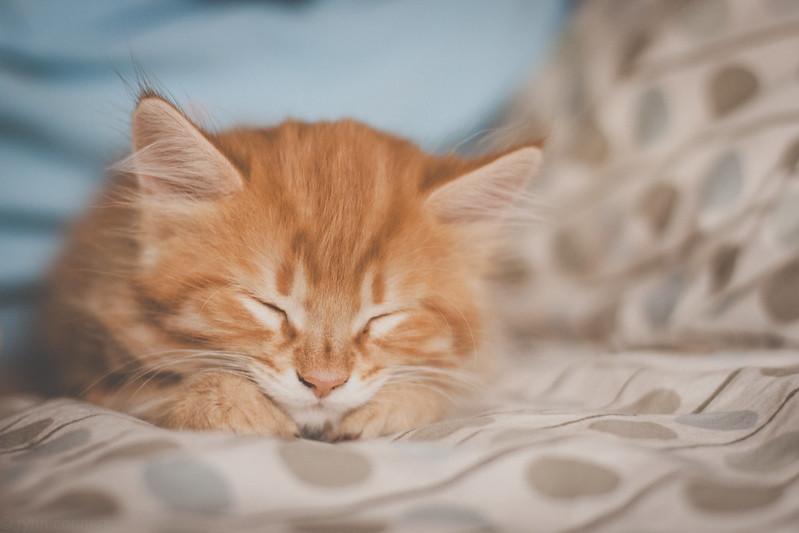 Sleeping Rosebud